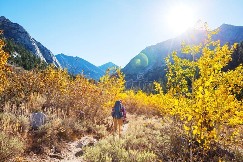 Hausse dans la saison d'automne photo libre de droits