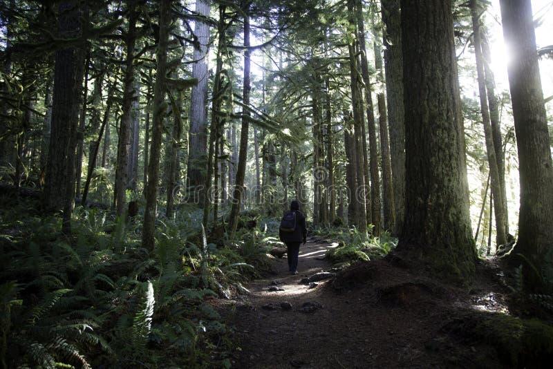 Hausse de forêt photographie stock libre de droits