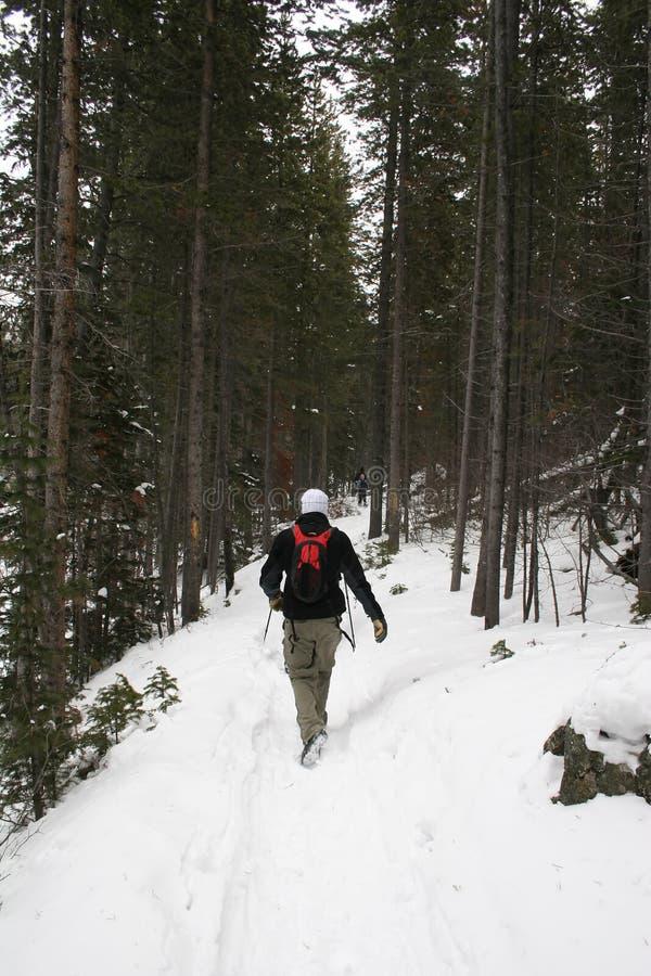 Hausse de l'hiver images libres de droits