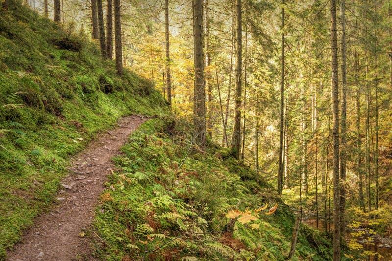 Hausse de l'impression dans Forêt-Noire le long du Roetenbach en automne, l'Allemagne Autumn Forrest Colorful Fall magique photo libre de droits