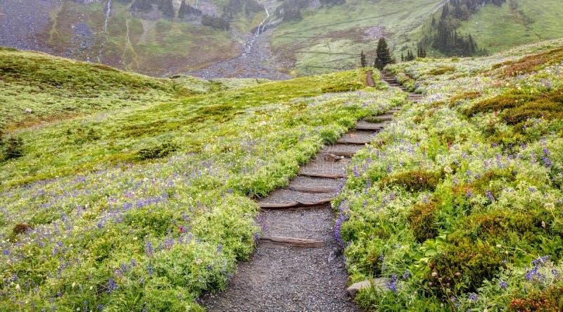 Hausse du mont Rainier dans le brouillard images libres de droits