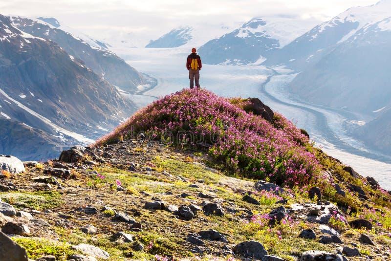 Hausse en glacier saumoné photographie stock