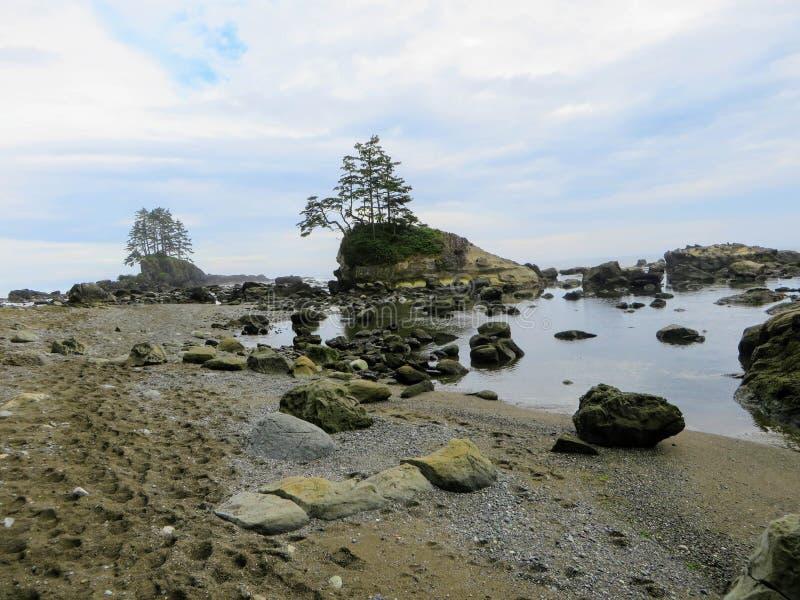 Hausse folle le long des belles côtes et forêt brumeuses de Vancou images libres de droits