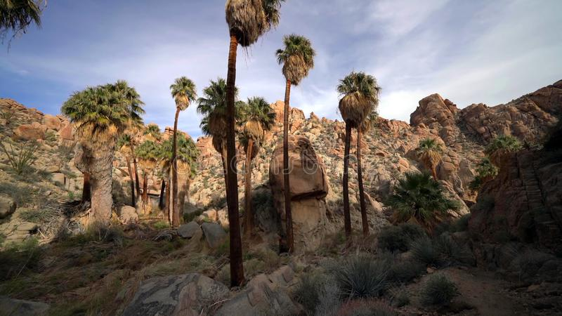 Hausse perdue d'oasis de paumes en Joshua Tree National Park, la Californie, Etats-Unis photos libres de droits