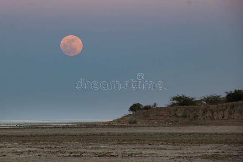 Hausse rose de lune chez Rann blanc de Kutch images stock