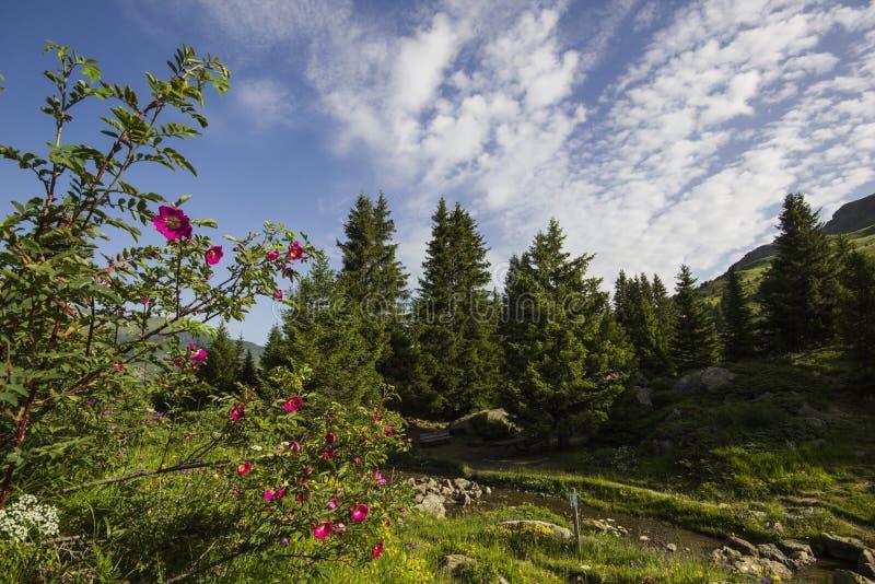 Hausse sur Alp Flix photo stock