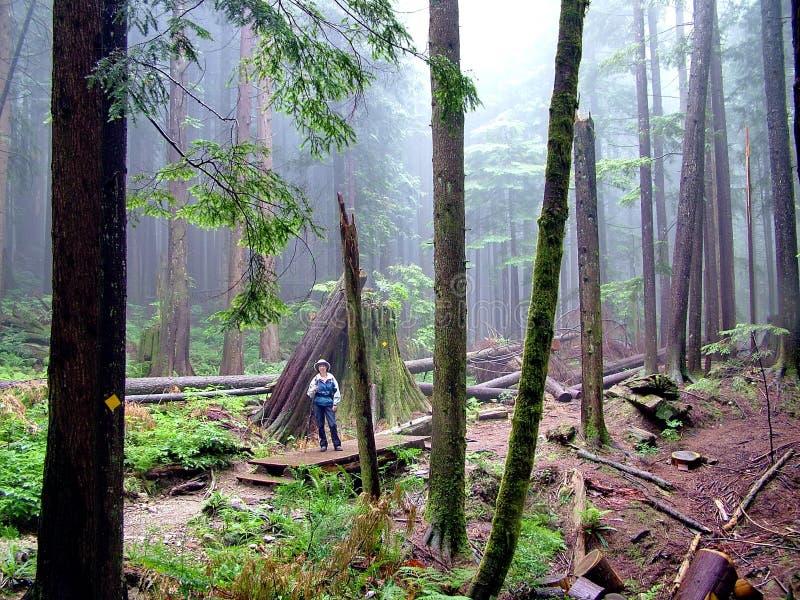 Hausses de femme sur Lynn Peak Trail en Lynn Headwaters Regional Park photos libres de droits