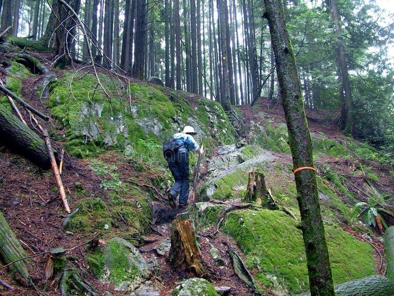 Hausses de femme sur Lynn Peak Trail en Lynn Headwaters Regional Park images stock