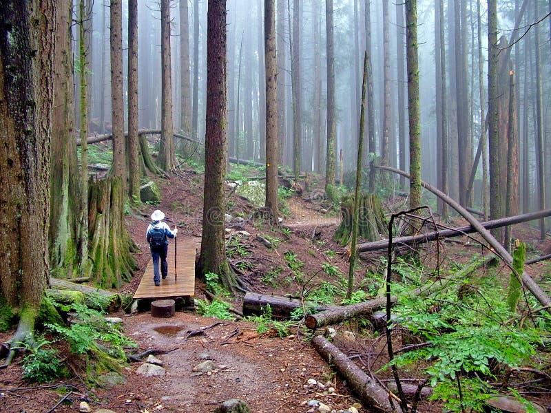Hausses de femme sur Lynn Peak Trail en Lynn Headwaters Regional Park image libre de droits