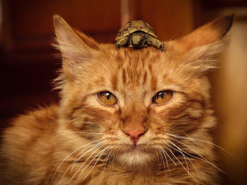Haustier-Freundschaft lizenzfreie stockfotografie
