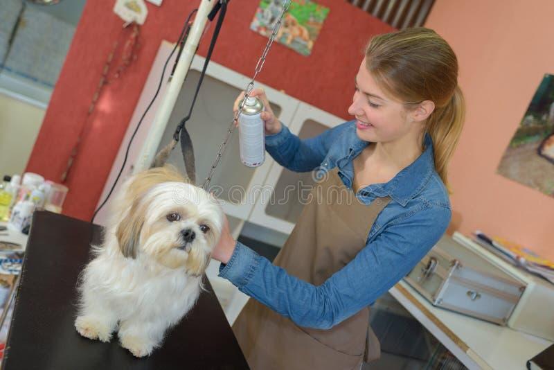 Haustier Groomer-Sprühhund lizenzfreies stockfoto