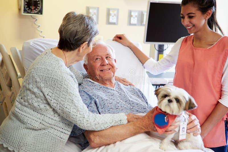 Haustier-Therapie-Hund, der älteren männlichen Patienten im Krankenhaus besucht lizenzfreie stockfotografie