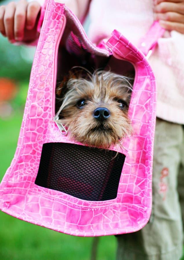 Haustier-Zubehör mit nettem Hund. lizenzfreie stockbilder