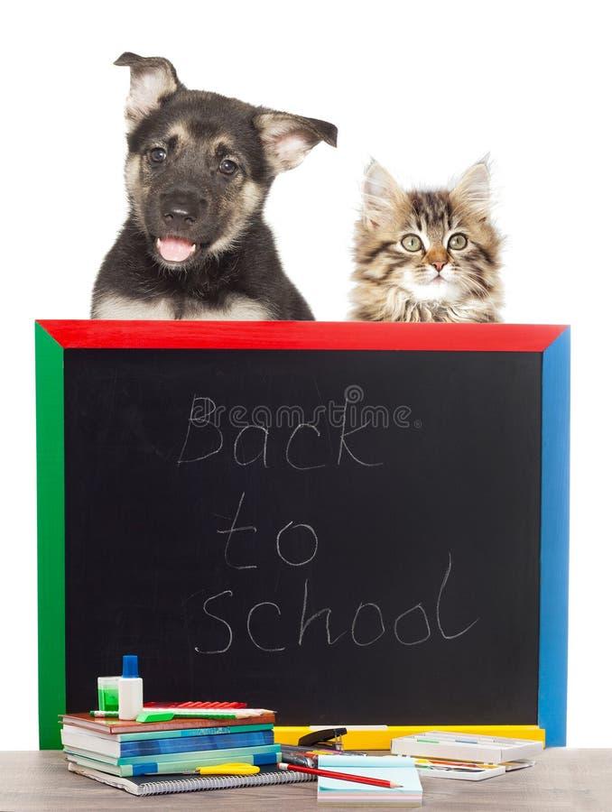 Haustiere und Zubehör von der Schule lizenzfreie stockfotografie