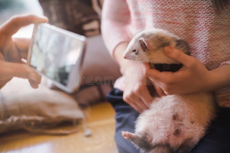 Haustierfrettchen-Besuchscafé erregt Aufmerksamkeit lizenzfreies stockbild
