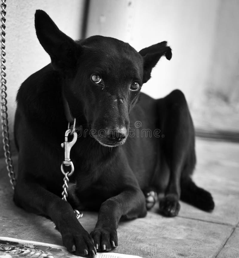 Haustierhund lizenzfreies stockfoto