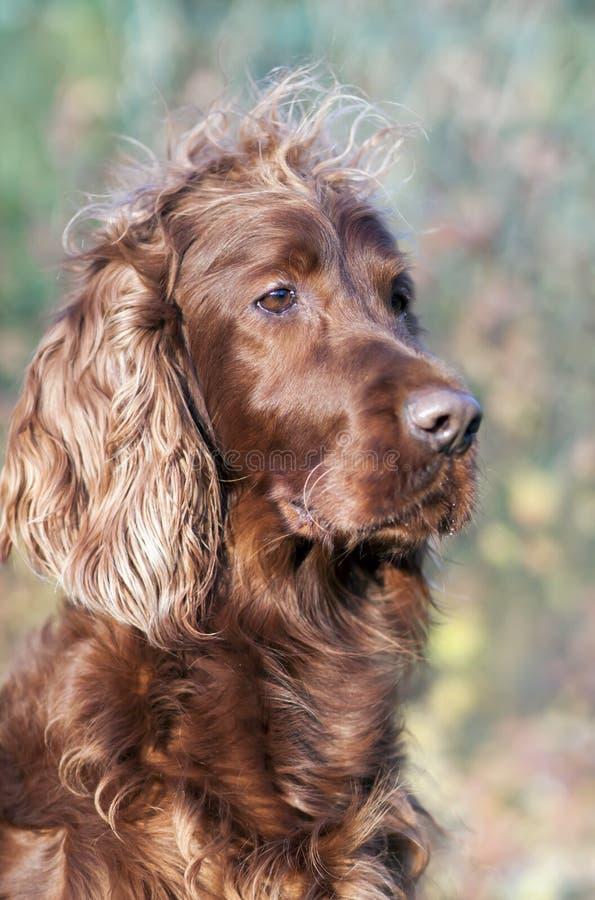 Haustierpflegenkonzept - lustiger Pelzhund mit dem langen Haar lizenzfreie stockfotografie