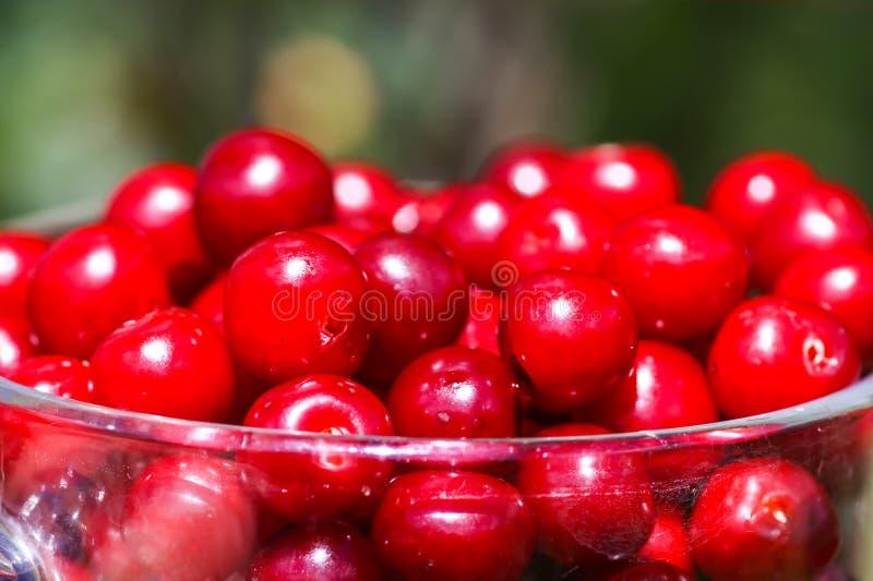Haut étroit de cerises mûres Fruits rouges frais de cerise dans le jardin d'été dans la campagne photo stock