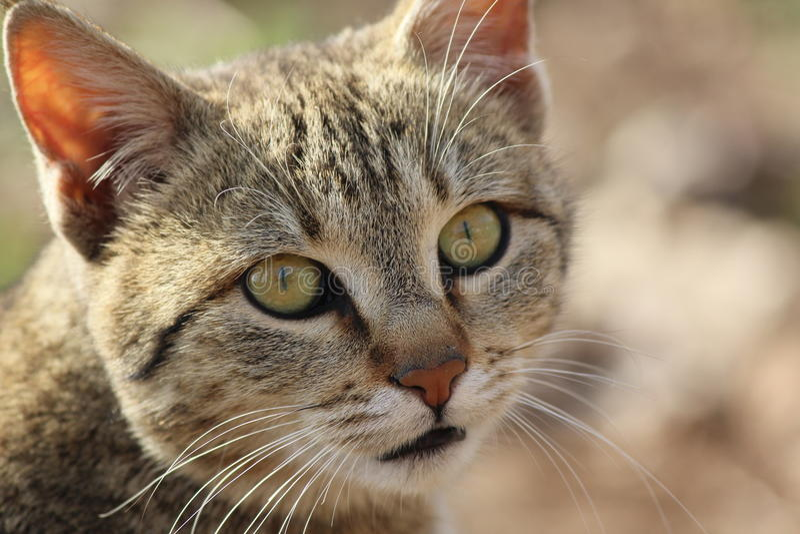 Haut étroit de chaton photo libre de droits