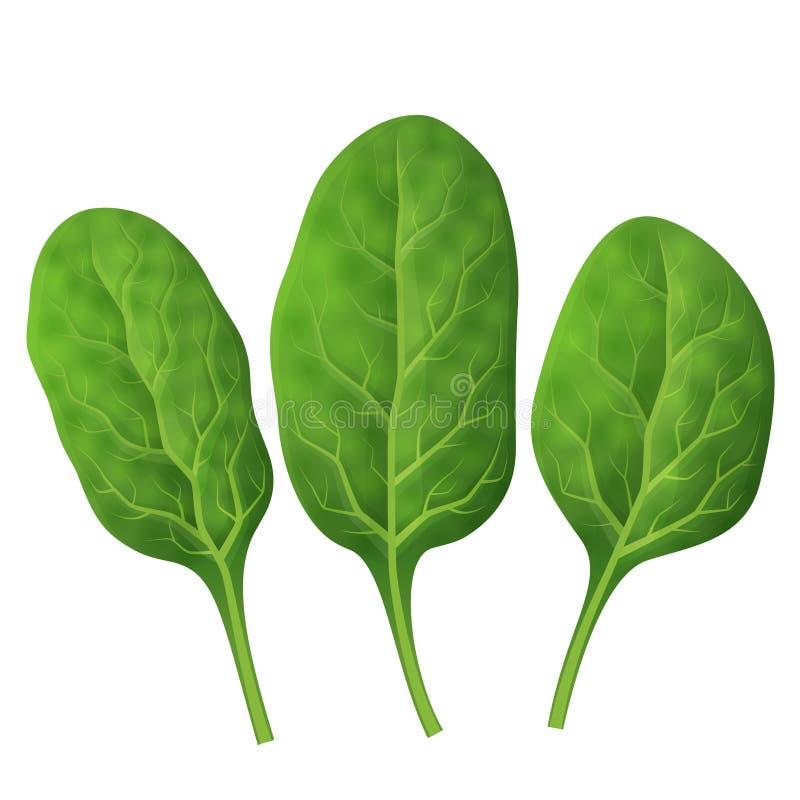 Haut étroit de feuilles d'épinards illustration de vecteur