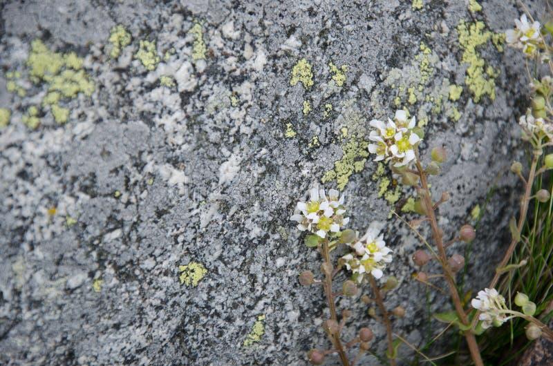 Haut étroit de fleurs blanches de plage photographie stock libre de droits