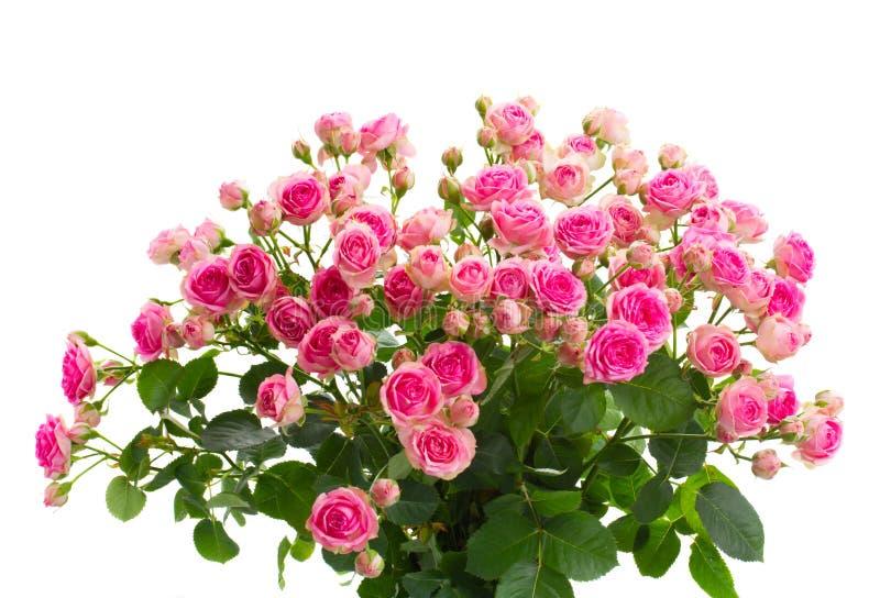 Haut étroit de roses roses fraîches de bouquet photos stock