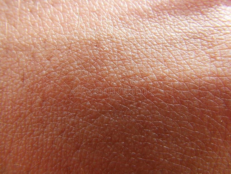 Haut stockfotografie