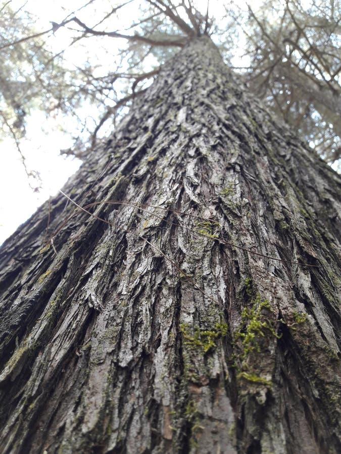 Haut arbre de dessous photos libres de droits