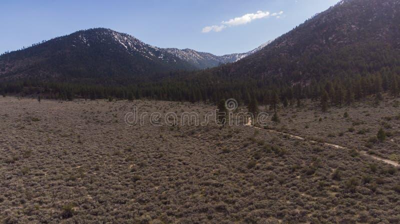 Haut arbre de montagne de brosse de seau de désert image stock