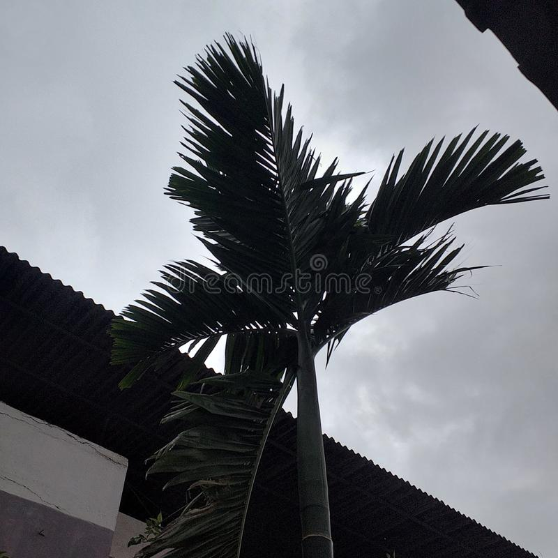 Haut arbre image stock