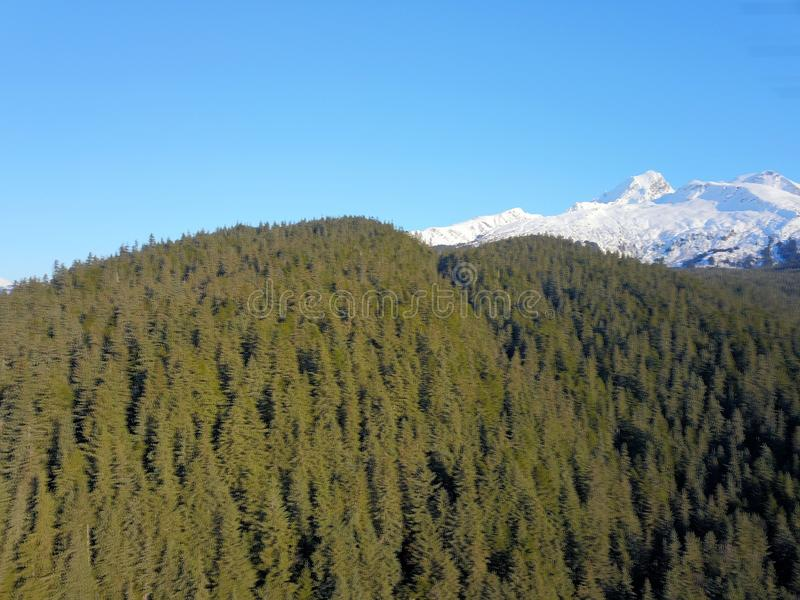 Haut au-dessus des arbres en Alaska photo libre de droits