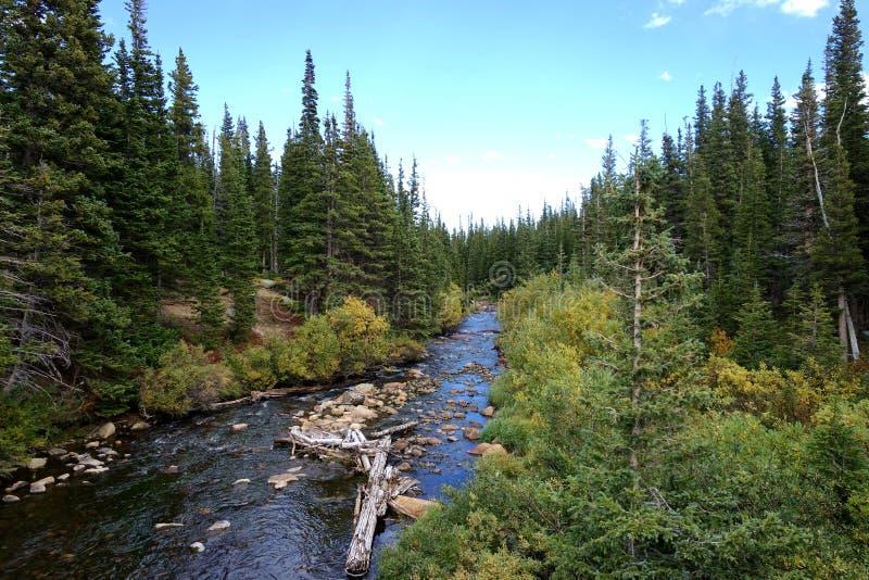 Haut courant de Rocky Mountain Nature Preserve Forest images libres de droits