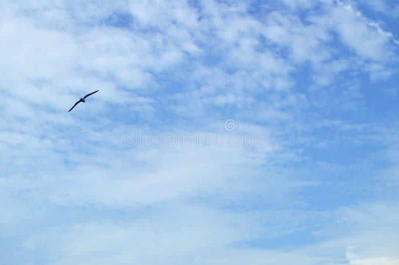 Haut dans l'albatros d'oiseau de vol de ciel bleu, répandant deux ailes au-dessus de la mer photos libres de droits