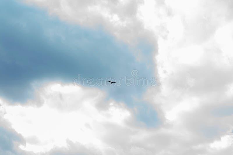 Haut dans le ciel un oiseau montant contre un ciel nuageux image libre de droits