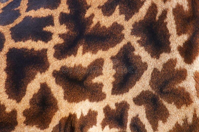 Haut der Giraffe lizenzfreie stockfotos