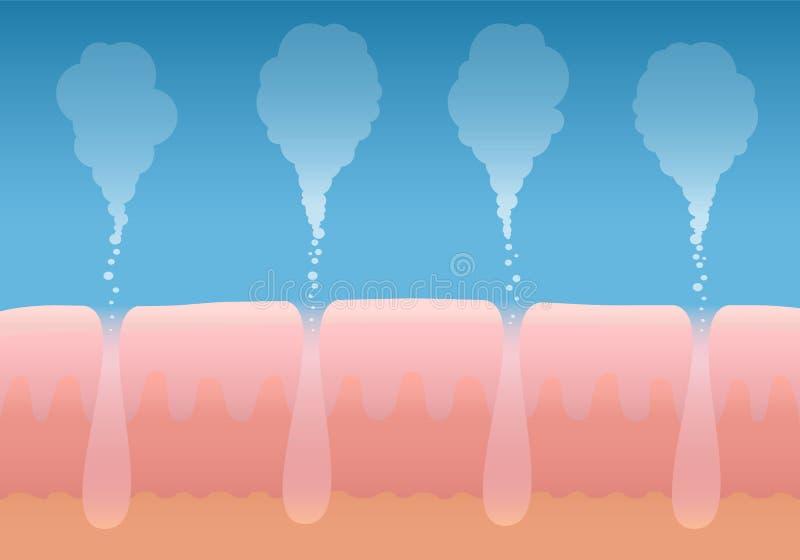 Haut, die menschliche Haut- Atmung atmet vektor abbildung