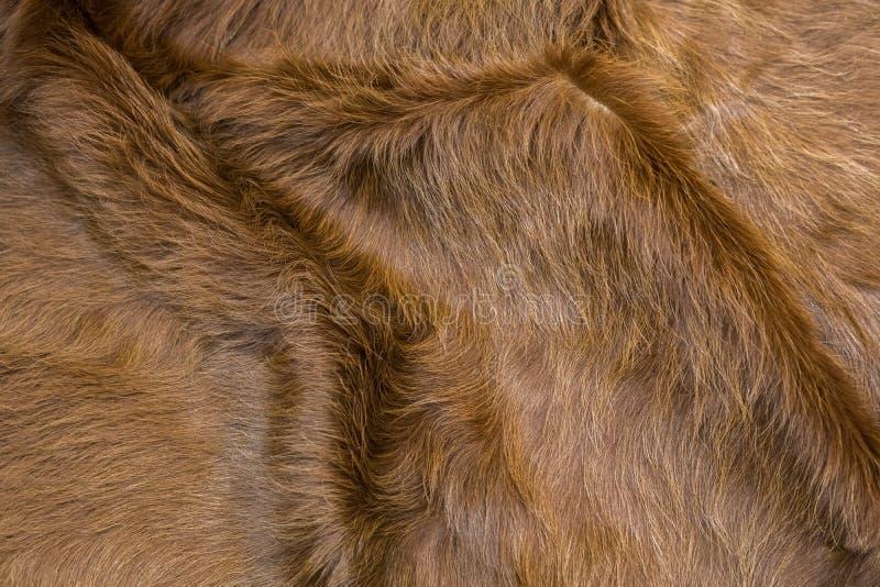 Haut einer Kuh stockbild