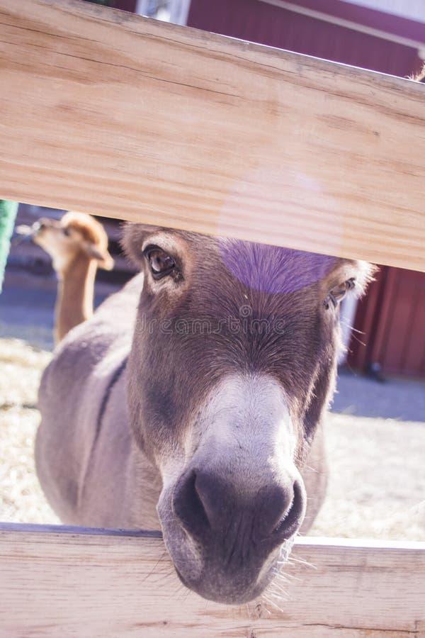Haut proche d'âne images stock