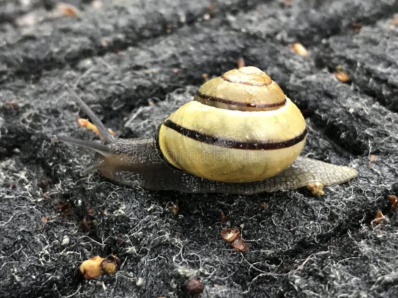 Haut proche d'escargot images libres de droits