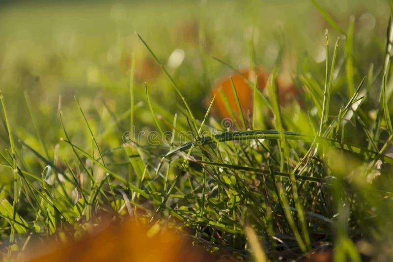 Haut proche d'herbe