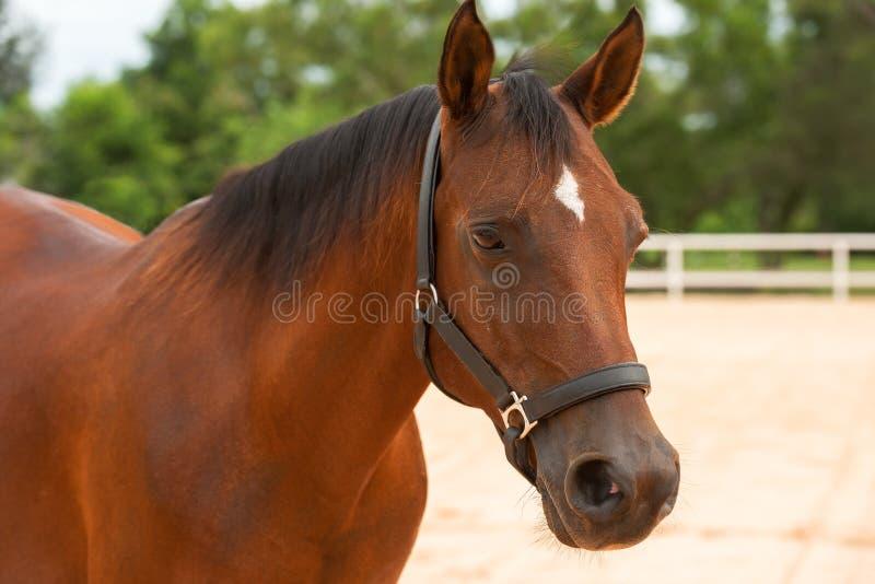 Haut proche de cheval images stock