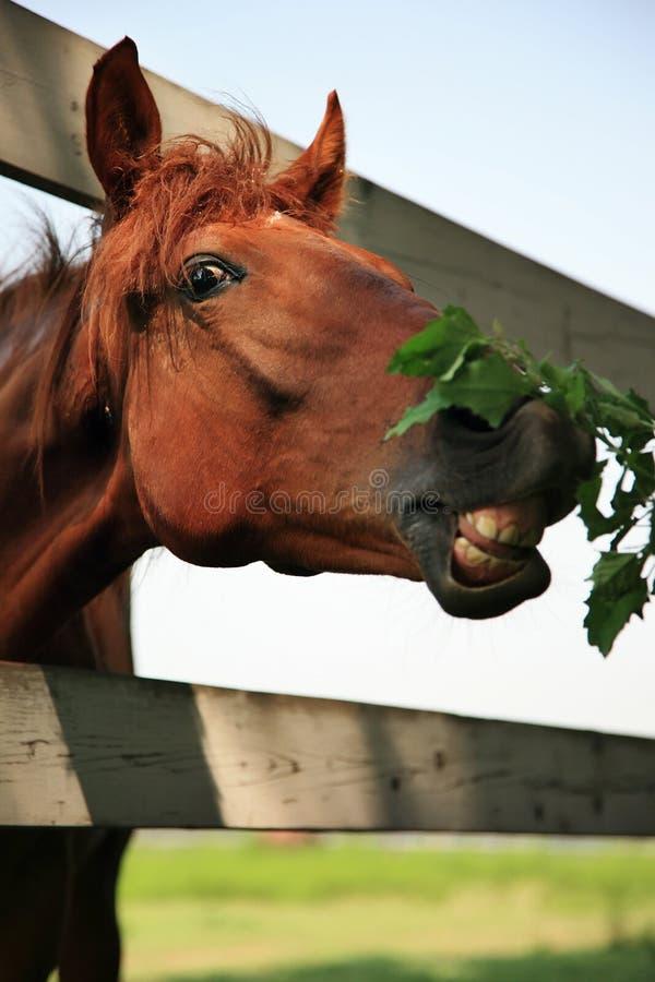 Haut étroit de cheval