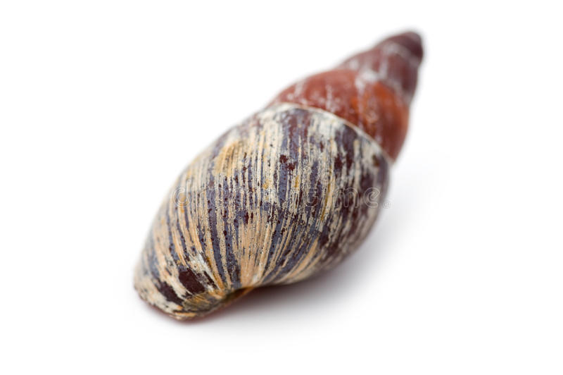 Haut proche de Seashell image libre de droits