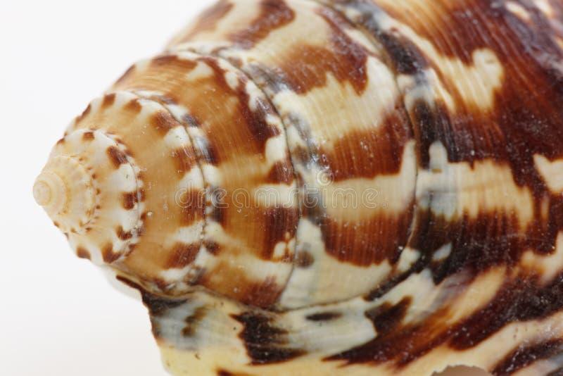 Haut proche de Seashell images stock