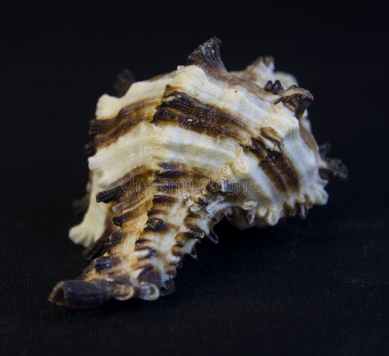 Haut proche de Seashell image stock