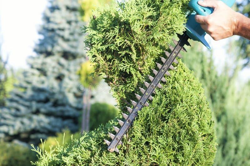 Haut ?troit d'usines d'?lagage Conif?res professionnels de Pruning de jardinier, mode de vie images libres de droits
