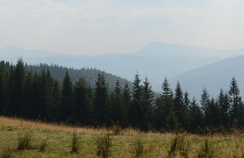 Haute de chemin de terre dans les montagnes parmi les pins grands contre le ciel bleu photographie stock libre de droits