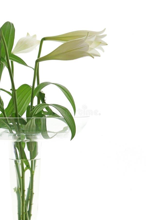 Haute fleur principale photographie stock libre de droits
