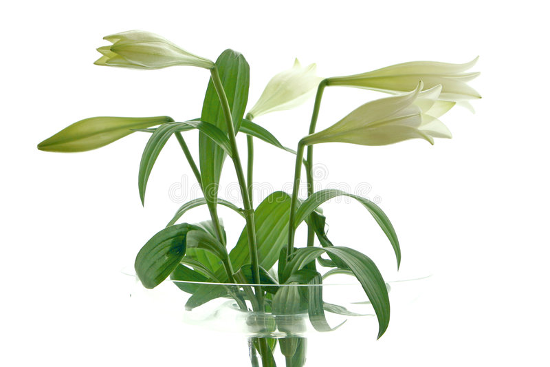 Haute fleur principale images libres de droits