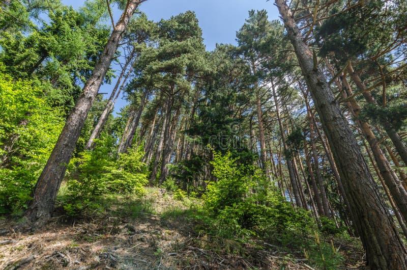 haute forêt images libres de droits